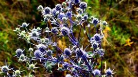 Σφήκα μια ηλιόλουστη θερινή ημέρα σε ένα μπλε λουλούδι απόθεμα βίντεο