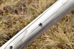 Σφήκα σε ένα ξύλο Στοκ φωτογραφία με δικαίωμα ελεύθερης χρήσης