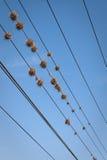 σφήκα φωλιών Στοκ φωτογραφία με δικαίωμα ελεύθερης χρήσης