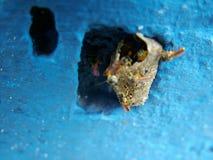 Σφήκες που στηρίζονται τη φωλιά τους σε έναν τοίχο στοκ φωτογραφία