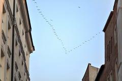 Σφήνα των πουλιών Στοκ φωτογραφία με δικαίωμα ελεύθερης χρήσης