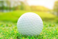 Σφαίρα γκολφ στον πράσινο αθλητισμό χλόης στοκ εικόνες με δικαίωμα ελεύθερης χρήσης