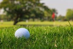 Σφαίρα γκολφ στην πράσινη χλόη Στοκ Φωτογραφίες