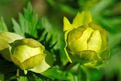 Σφαίρα-λουλούδι Στοκ φωτογραφία με δικαίωμα ελεύθερης χρήσης
