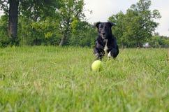 σφαίρα που κυνηγά το σκυ&l Στοκ Εικόνες