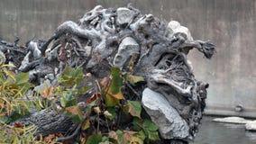 Σφαίρα ρίζας από το δέντρο Στοκ Εικόνες