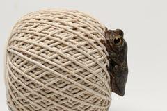 Σφαίρα της σειράς στενό σε επάνω με το βάτραχο Στοκ φωτογραφίες με δικαίωμα ελεύθερης χρήσης