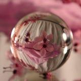 Σφαίρα φακών με τα ρόδινα λουλούδια κερασιών στοκ φωτογραφίες με δικαίωμα ελεύθερης χρήσης