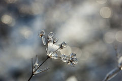 Σφαίρες πάγου Στοκ εικόνα με δικαίωμα ελεύθερης χρήσης