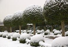 Σφαίρες πυξαριού κάτω από το χιόνι Γαλλία Ευρώπη στοκ φωτογραφίες με δικαίωμα ελεύθερης χρήσης