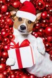 Σφαίρες σκυλιών και Χριστουγέννων Άγιου Βασίλη Χριστουγέννων ως υπόβαθρο στοκ εικόνες
