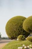 Σφαιρικός θάμνος πυξαριού στοκ φωτογραφία με δικαίωμα ελεύθερης χρήσης