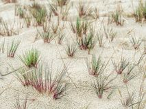 Σφιγκτήρες της χλόης αμμόλοφων - εθνικό πάρκο Slowinski, Πολωνία Στοκ Φωτογραφίες