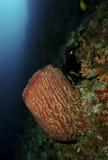 Σφουγγάρια, νησί Sipadan, Sabah Στοκ φωτογραφία με δικαίωμα ελεύθερης χρήσης