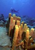 σφουγγάρια του Bequia Στοκ φωτογραφία με δικαίωμα ελεύθερης χρήσης