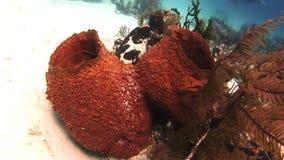 Σφουγγάρι θάλασσας Κινηματογράφηση σε πρώτο πλάνο απόθεμα βίντεο
