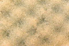 Σφουγγάρι λουτρών Στοκ Φωτογραφία