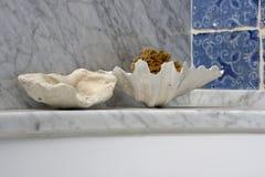σφουγγάρι στοκ εικόνα με δικαίωμα ελεύθερης χρήσης
