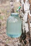 σφρίγος σημύδων Στοκ εικόνα με δικαίωμα ελεύθερης χρήσης