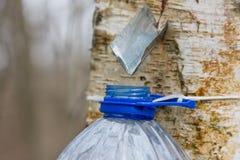 σφρίγος συγκομιδής σημύδων Στοκ εικόνες με δικαίωμα ελεύθερης χρήσης
