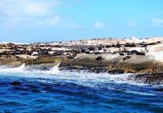 Σφραγίδα γουνών ακρωτηρίων στον κόλπο Hout στοκ φωτογραφία με δικαίωμα ελεύθερης χρήσης