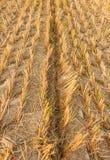 Σφραγίδα μιας γεωργικής μηχανής σε ένα ξηρό λιβάδι Στοκ Φωτογραφία