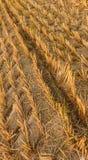 Σφραγίδα μιας γεωργικής μηχανής σε ένα ξηρό λιβάδι Στοκ φωτογραφία με δικαίωμα ελεύθερης χρήσης