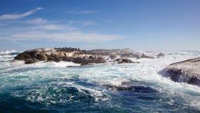 Σφραγίδες γουνών ακρωτηρίων Στοκ φωτογραφίες με δικαίωμα ελεύθερης χρήσης