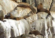 Σφραγίδες στους βράχους Στοκ φωτογραφία με δικαίωμα ελεύθερης χρήσης