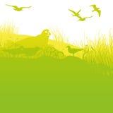 Σφραγίδα στην ακτή με seagulls ελεύθερη απεικόνιση δικαιώματος