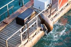 Σφραγίδα στο λιμάνι Santa Barbara Στοκ Εικόνες
