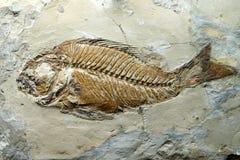 Σφραγίδα των προϊστορικών ψαριών Στοκ Εικόνα