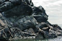 Σφραγίδα Στοκ φωτογραφία με δικαίωμα ελεύθερης χρήσης