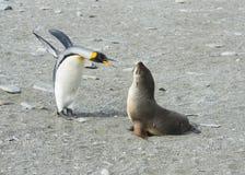 Σφραγίδα penguin-γουνών βασιλιάδων Στοκ φωτογραφία με δικαίωμα ελεύθερης χρήσης