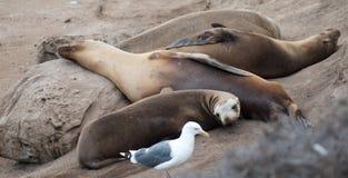 Σφραγίδες και πουλιά Στοκ εικόνες με δικαίωμα ελεύθερης χρήσης