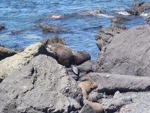 Σφραγίδες της Νέας Ζηλανδίας Στοκ Φωτογραφία