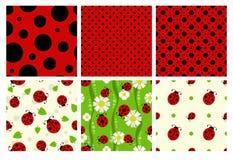 Σχέδια Ladybug καθορισμένα Στοκ φωτογραφίες με δικαίωμα ελεύθερης χρήσης