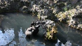 Σχέδιο διακοσμήσεων στη λίμνη του ιαπωνικού ύφους κήπων στον κήπο δαμάσκηνων Naritasan