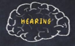 Σχέδιο κιμωλίας του ανθρώπινου εγκεφάλου με την ακρόαση επιγραφής στοκ εικόνα
