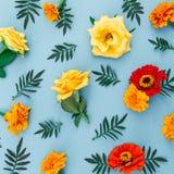Σχέδιο λουλουδιών φιαγμένο από λουλούδια με τα φύλλα στο μπλε υπόβαθρο Επίπεδος βάλτε, τοπ άποψη στοκ εικόνες