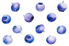 Σχέδιο με τα βακκίνια σε Watercolor Στοκ Εικόνα