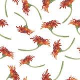 Σχέδιο με τα κόκκινα λουλούδια μαργαριτών ή χρυσάνθεμων gerbera η διακοσμητική εικόνα απεικόνισης πετάγματος ραμφών το κομμάτι εγ απεικόνιση αποθεμάτων