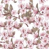 Σχέδιο με τα λουλούδια κερασιών στοκ εικόνα με δικαίωμα ελεύθερης χρήσης