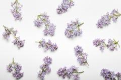 Σχέδιο με τα λουλούδια, την πασχαλιά, τους κλάδους και τα φύλλα που απομονώνονται στο άσπρο υπόβαθρο Τοπ όψη στοκ φωτογραφίες