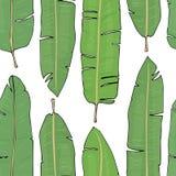 Σχέδιο με τα τροπικά φύλλα φοινικών στο άσπρο υπόβαθρο Ζωηρόχρωμη διανυσματική απεικόνιση στο ύφος σκίτσων Στοκ Φωτογραφία