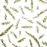 Σχέδιο με τους floral κλάδους που απομονώνεται στο άσπρο υπόβαθρο Στοκ εικόνα με δικαίωμα ελεύθερης χρήσης