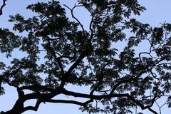 Σχέδιο σκιαγραφιών δέντρων Στοκ φωτογραφία με δικαίωμα ελεύθερης χρήσης