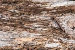 Σχέδιο στην ξύλινη σύσταση στοκ εικόνες με δικαίωμα ελεύθερης χρήσης