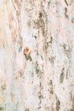 Σχέδιο σύστασης φλοιών δέντρων ξύλινος φλοιός για το υπόβαθρο Στοκ Εικόνα