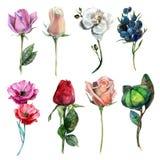 Σχέδιο των λουλουδιών από το watercolor και τα μολύβια Στοκ εικόνα με δικαίωμα ελεύθερης χρήσης
